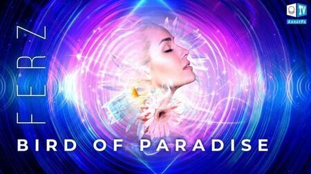 Bird Of Paradise – Ferz